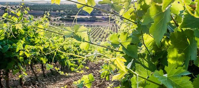 """OS PRESENTAMOS A """"BODEGAS TIERRAS DE ORGAZ"""" (Vino de la Tierra de Castilla)"""