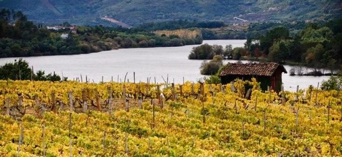 """Viña da cal: """"Contamos con el privilegio de ofrecer al mundo las experiencias que nuestros vinos provocan en el paladar"""""""