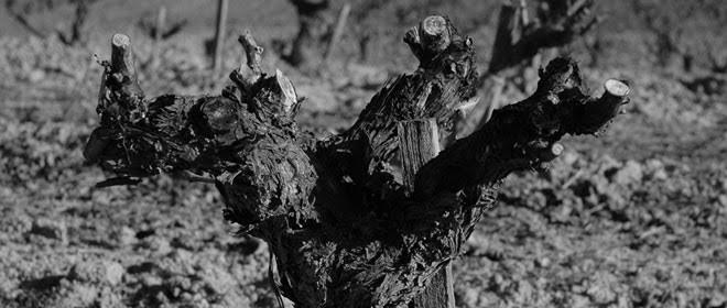 Bodegas Felix Callejo; larga tradición en el mundo del vino