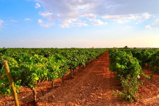 Bodegas Finca Venta Don Quijote:  En el triángulo de oro de la viticultura
